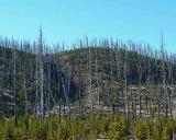 Yellowstone Fire 1988