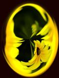 Warped Flower