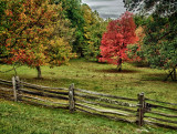 Fall Fence and Tree
