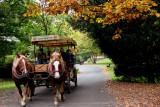 October in Bamberg