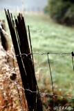 The fence...
