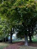 Der Kastanienbaum..