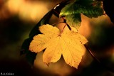 This autumn evening...