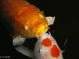 2 Fishy Flirts