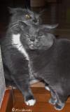 Two Sweet Sisters - Kate & Cordelia