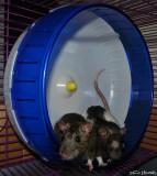 Super Pet Silent Spinner Exercise Wheel