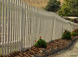 Fresh Whitewashed Fence