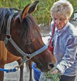 Khnigt's Wyndsong (Arabian) & Terri