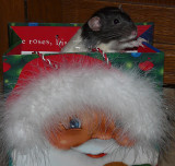 CrookLi in Santa Gift Bag