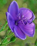 purple flower_1_.jpg