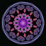 Japanese Anemone Kaleidoscope