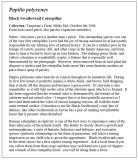 Black Swallowtail Essay