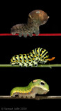 Caterpillar Slide Show