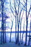 Blue Morning