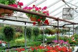 Greenhouse*