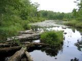 Frog Lake, 2004