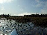 Swamp on Club lake2