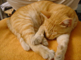 Mellow Yellow: Tribute to a Great Cat