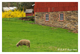 Spring at Stover Myer Farm