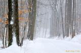 Winter Mist Along Cuttalossa