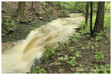 Summer Rain along Smithtown Creek II