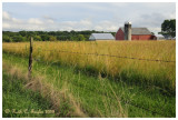 Summer Fields, Tinicum
