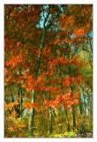 Reflecting Autumn Color