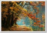 *** Misty Autumn Morning