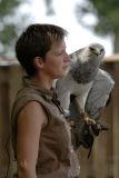 Aigle bleu - Grey buzzard eagle - Geranoaetus melanoleucus