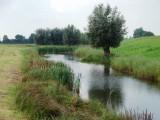 Green forelands