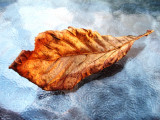 herfstblad2.jpg