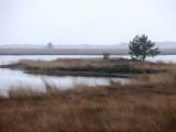 Swamp and lake