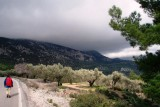 Passing an olive orchard