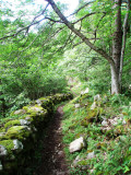 Forestpath with wall