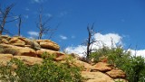 Rocks, shrubs and trees