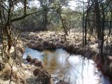 Frozen swamp water