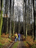 Wood of beeches