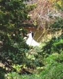 Wedding glimpsed thru trees at Parc des Buttes Chaumont