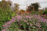 Flora in les Jardin des Plantes