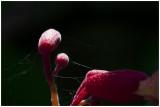 20090321-IMG_1213-4x6.jpg