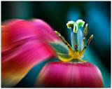 HalfFlower-blur.jpg