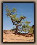 Struggling Tree