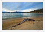 Driftwood On Sand Beach