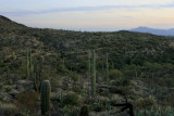 Arizona Dejavu
