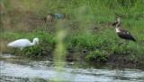 Ibis Struts, LBH Hunts