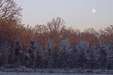 Frosty moonscape