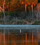 Egret Pond at sunset