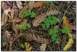 Forest Floor, Muir Woods