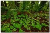 Forest Floor, Ecola State Park
