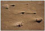 Sand Detail, Cannon Beach 2